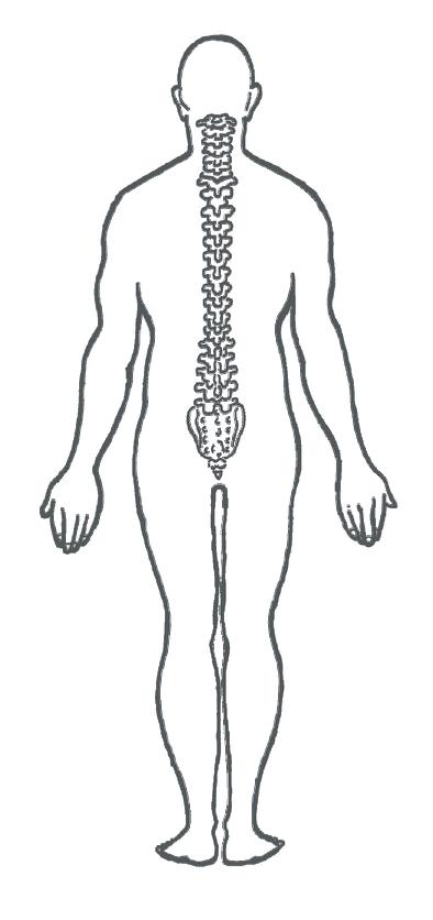 The human torso